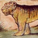 tigerexcerpt